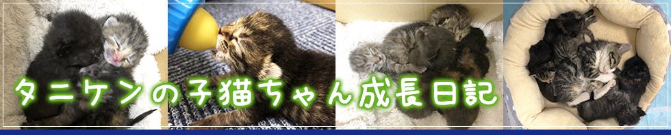 タニケンの子猫ちゃん成長日記