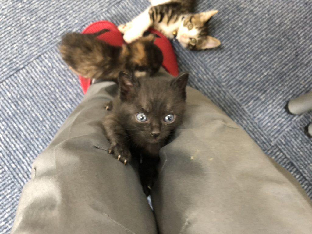 足に上る子猫ちゃん